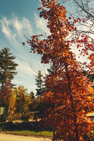 Fall tree Reklamní fotografie