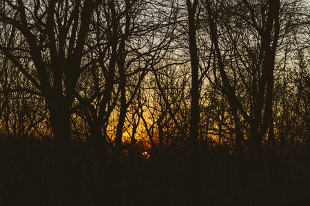 Sundown in the woods