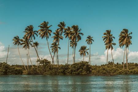 Brazilian Landscape