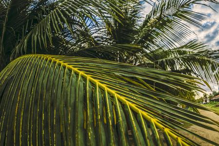 Tropical palm Reklamní fotografie