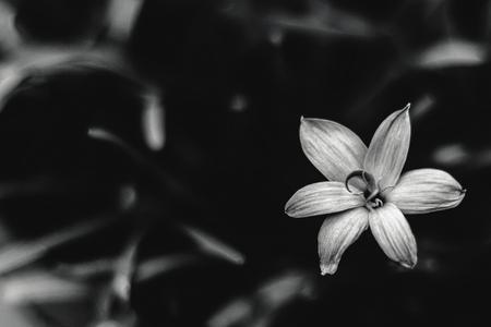 Melancholic flower Reklamní fotografie