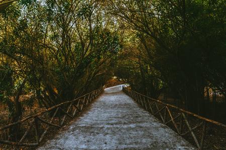 Path in a forest Reklamní fotografie