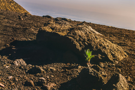 Plant growing in volcano