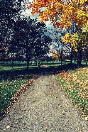Path during fall Reklamní fotografie - 92846134