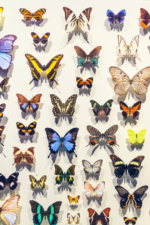 Different kinds of butterflies on display at an exhibition