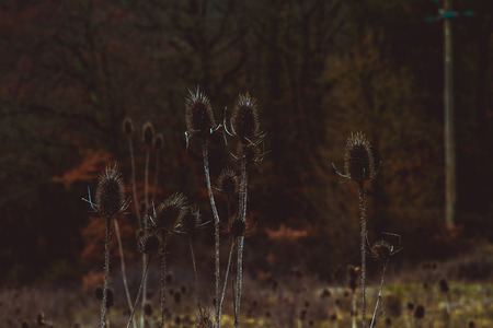 Grungy plants in a field