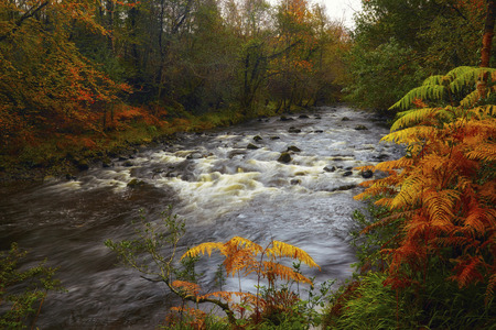 described: The Glensaul River drains the Partry Mountains and runs down though a forest which is described as a native woodland cosnisting of mixed leaf plantations
