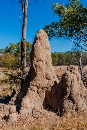 termite: Termite mounds, Northern Territory, Australia