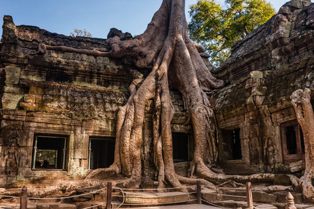 The famous ruins of Ta Prohm Buddist Temple, Siem Reap, Cambodia