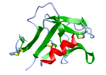 A 3D cartoon model of the human CD94 C-type lectin receptor, white background