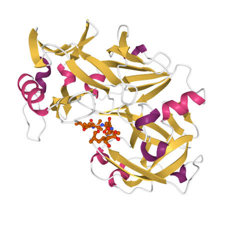 Structure of human pepsin complexed with inhibitor pepstatin, 3D cartoon model isolated, white background Imagens
