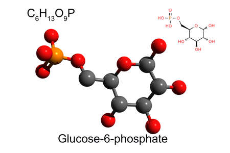 Chemical formula, skeletal formula and 3D ball-and-stick model of glucose 6-phosphate, white background Stock Photo