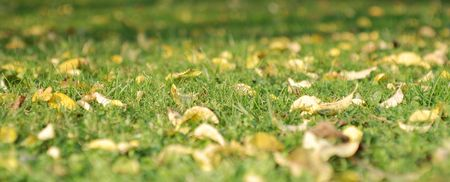 Autumnal background with the leaves on a grass Stock Photo - 3697848