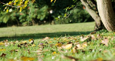 Autumn in the park Stock Photo - 3697849