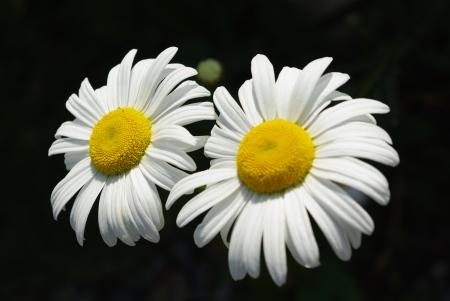 blumen: Flowers Stock Photo