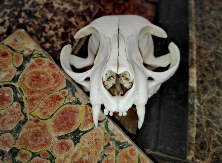 Old Antique Books with Vintage CAT SKULL, Leather-Bound and Marbled Paper Book Stock Photo
