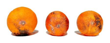 Rotten Fruit ORANGE