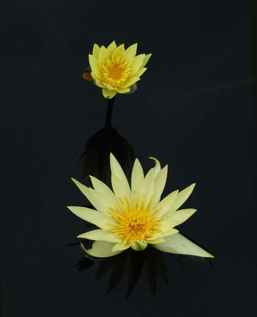 tropical water lilies in fall, original color photo