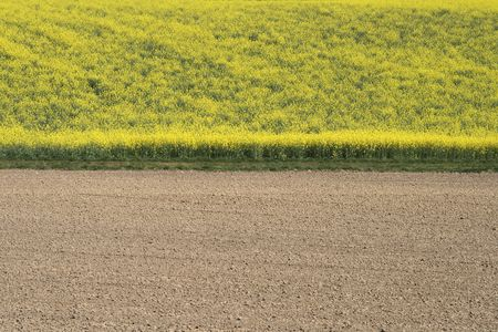 Field with rapeseed and fresh furrows Stock Photo - 877368