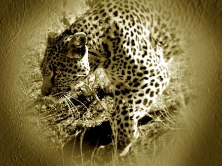 leopard taken inside kruger park south africa Stock Photo