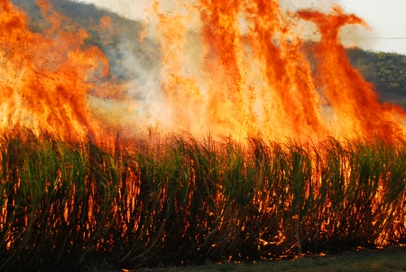 sugar cane farmland burning photo