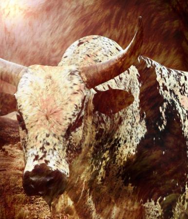 big bull Stock Photo