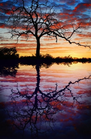 tree sunset lake