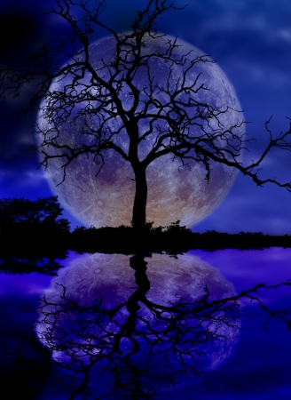 dark skies: moon and tree