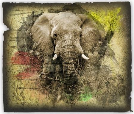 grunge elephant