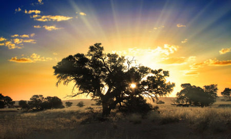 africa tree: Tree at sunrise