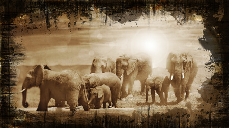 elephants at waterhole on grunge photo