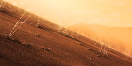 sand dune desert photo