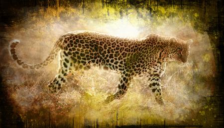 leopard walking on grunge