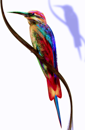 abstract colorful Bird   Bee-eater