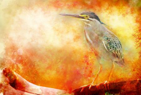 water bird on branch  illustration  Greenbacked Heron Stock Photo