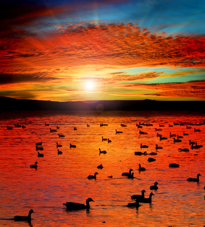 sunset lake with water birds Stock Photo