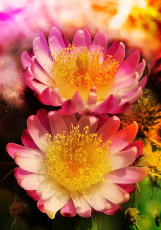 cactus flower, blossom