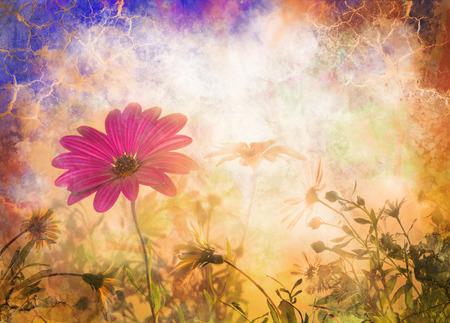 daisy flower grunge, spring flowers, sunrise Stock Photo