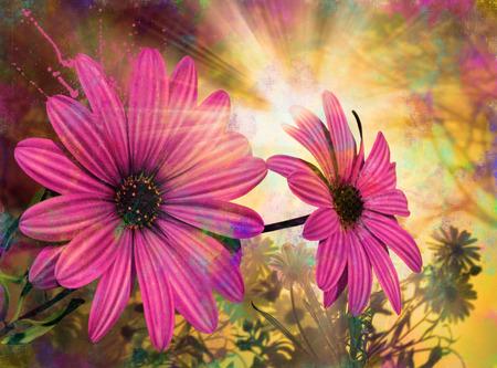 daisy flowers in morning sun, spring time, illustration