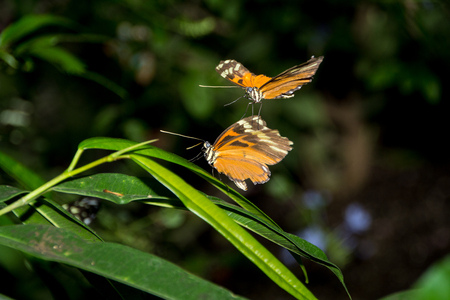 Two orange and black butterflies Banco de Imagens