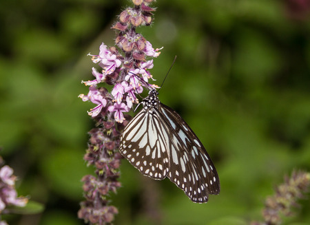 Black and white butterfly Imagens