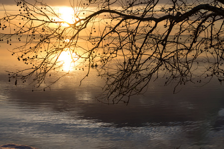 waterscapes: Sunrise reflected through a tree