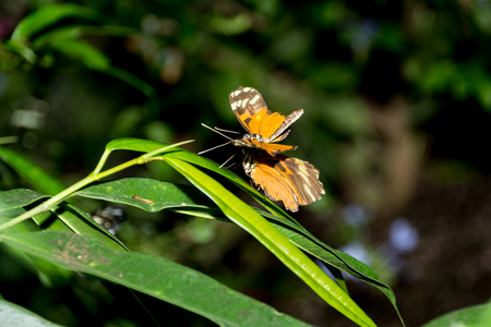 Butterfly 2-2, you are clear for landing Banco de Imagens