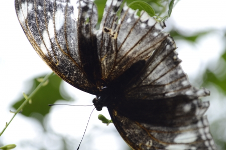 Brown butterfly close-up photo