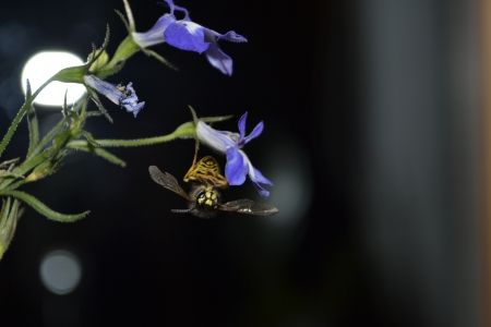 Bee hugging a purple flower Banco de Imagens