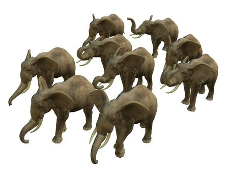 3D rendered isolated herd of walking elephant.