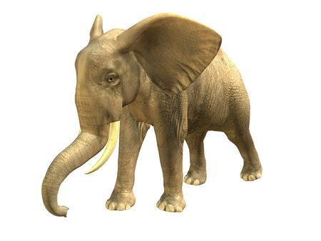 3D rendered isolated walking elephant.