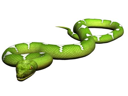 Green python rendered on white background