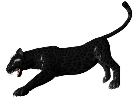 3D rendered image of Black panther on white background an isolated photo