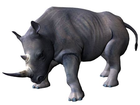 3D rendered model of african rhinoceros on white background isolated